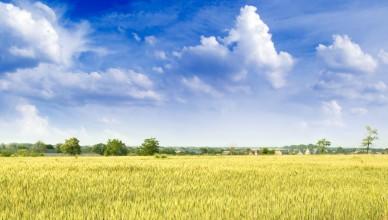 De enorme graanvelden in het westen van Oekraïne waren tot voor kort van de overheid en worden nu door de regering in Kiev voor spotprijzen aangeboden aan giganten als Monsanto